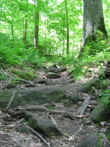 One of the trails by Pugh Cabin