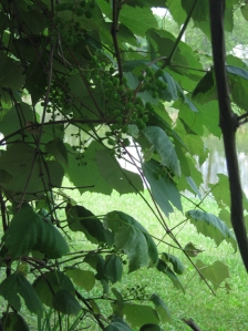 "blog post ""Spiritually Fruitful"" by marissabaker.wordpress.com"