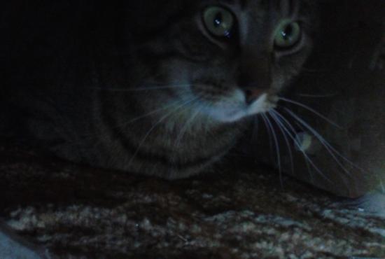 Lessons From My Nervous Cat | marissabaker.wordpress.com