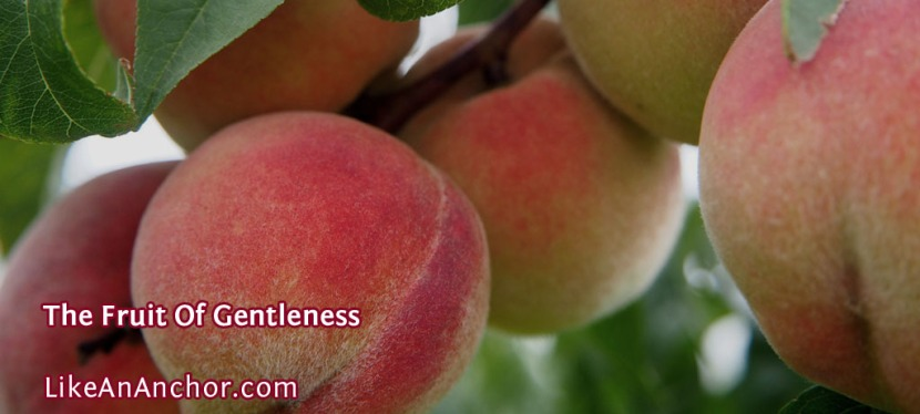 The Fruit Of Gentleness