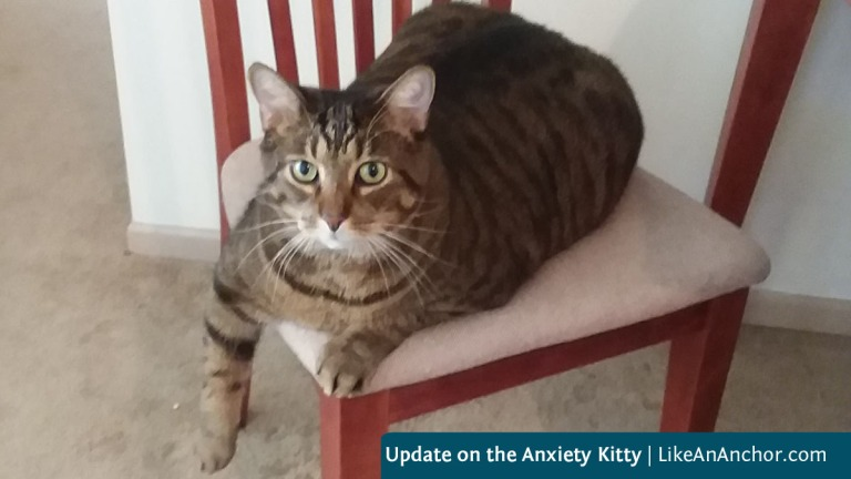 Update on the Anxiety Kitty | LikeAnAnchor.com