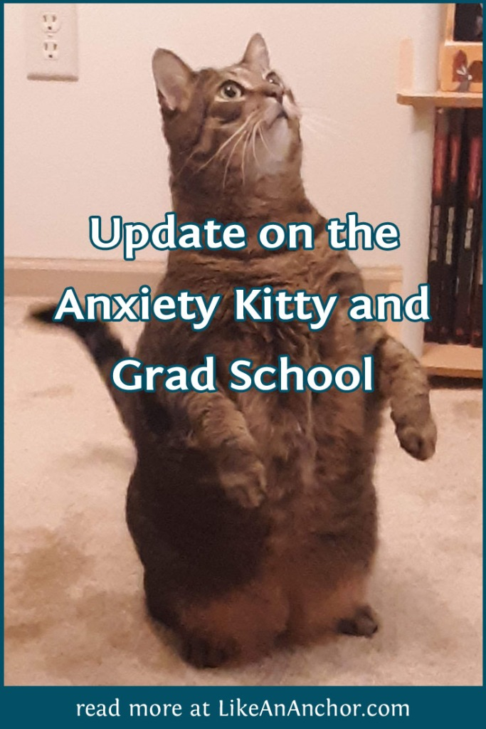 Update on the Anxiety Kitty and Grad School | LikeAnAnchor.com